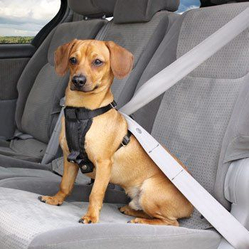 Barksbar Pet Car Seat Cover For Cars Trucks And Suvs Travel