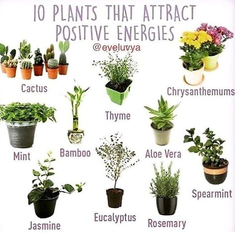 Oooh this is so helpful! I already have Rosemary, Aloe, and a mini bamboo forest(do y'all wanna see)?😊 I think spearmint or Eucalyptus will be next on my list🍃🌱🌿 Which ones do you have? Herb Garden, Indoor Garden, Vegetable Garden, Indoor Plants, Garden Planters, Container Gardening, Gardening Tips, Plantas Indoor, Cactus