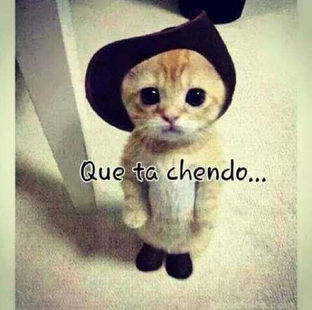 Memes Chistosos De Amor 57 Ideas For 2019 Funny Relatable Memes Memes Funny Faces Mexican Funny Memes
