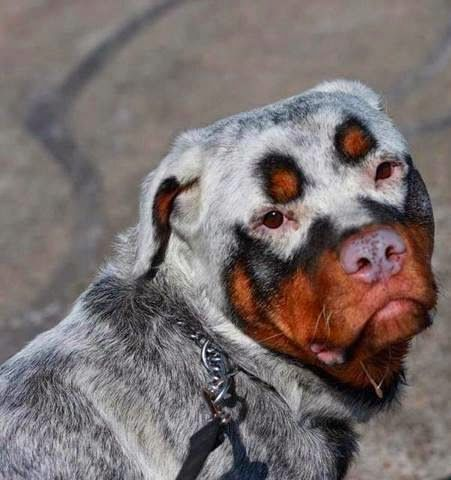 5 Dogs with most amazing fur | The Pet's Planet | Animals beautiful,  Beautiful dogs, Unique animals