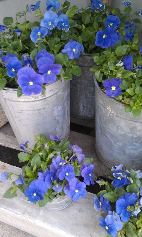 container gardening/aluminum pails always make good vessels for plants ..add a couple holes in the bottom when planting