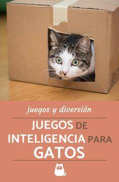 Juegos De Inteligencia Para Gatos 4 Ideas Caseras Y Muy Divertidas Jugetes Para Gatos Juegos Para Gatos Juguetes Caseros Para Gatos