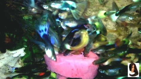 #1080P #Aquarium #Design #FHD #Fish #Freshwater #howto #Tank #fish #tank #howto #make #design #aquarium #FHD #1080P #NEW #2017 #Freshwater #S...        #fish #tank #howto #make #design #aquarium #FHD #1080P #NEW #2017 #Freshwater #Setup #Disease #Breeding #Plants #Books #Articles #Saltwater #Guide #Reef #Coral #Live #Rock #Equipment #Reviews #Light #Brine #Shrimp #Hatchery #Osmosis #UV #Sterilizer #Chiller #most #pictures #videos #movies #youtube #ever  Freshwater Fish Barbs Betta Catfish...