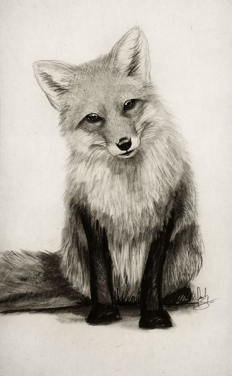 20 Ideas Drawing Ideas Pencil Nature Easy Animal Drawings Pencil Drawings Of Nature Fox Drawing