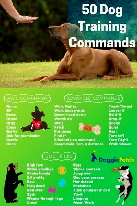 3 Simple Dog Training Tips That Will Change Your Dogs In No Time Dog Training Obedience Dog Training Dog Training Near Me