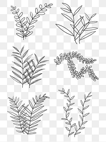 Hand Drawn Illustration Black And White Line Drawing Plant Leaves Hand Painted Black And White Line Drawing Png Transparent Clipart Image And Psd File For Fr Plant Drawing Flower Line Drawings