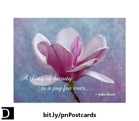 This Lovely Postcard Features A Beautiful Pink And White Chinese Magnolia Flower Set Against A Textured Blue And Pink Quotes Blooming Postcard Magnolia Flower