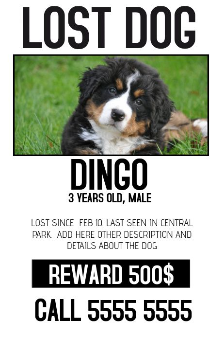 Lost Dog Lost Pet Color Poster Template In 2020 Losing A Dog Losing A Pet Poster Template