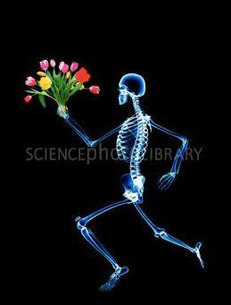 x ray w bouquet flowers human skeleton photographic print skeleton flower