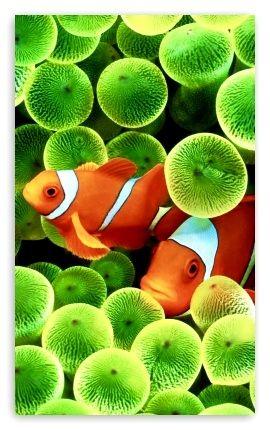 Fond Decran Hd 3d Anime 121 Colorful Fish Aquarium Live Wallpaper Fish Wallpaper