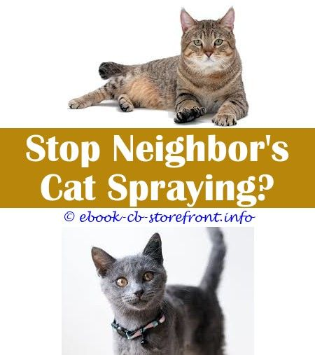 6 Graceful Simple Ideas Will Fixing A Female Cat Stop Spraying Is