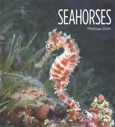 Seahorses By Melissa Gish 2017 Hardcover Seahorses For Sale