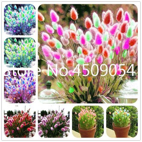 200pcs Giant Potato Seeds Bonsai Plant Tree House Herb Garden Flower Pot Decor