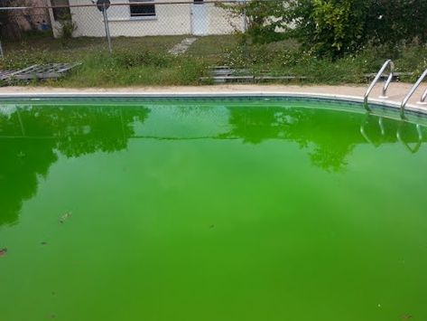 How to Get Rid of Green Algae in swimming Pools Water | Pool ...