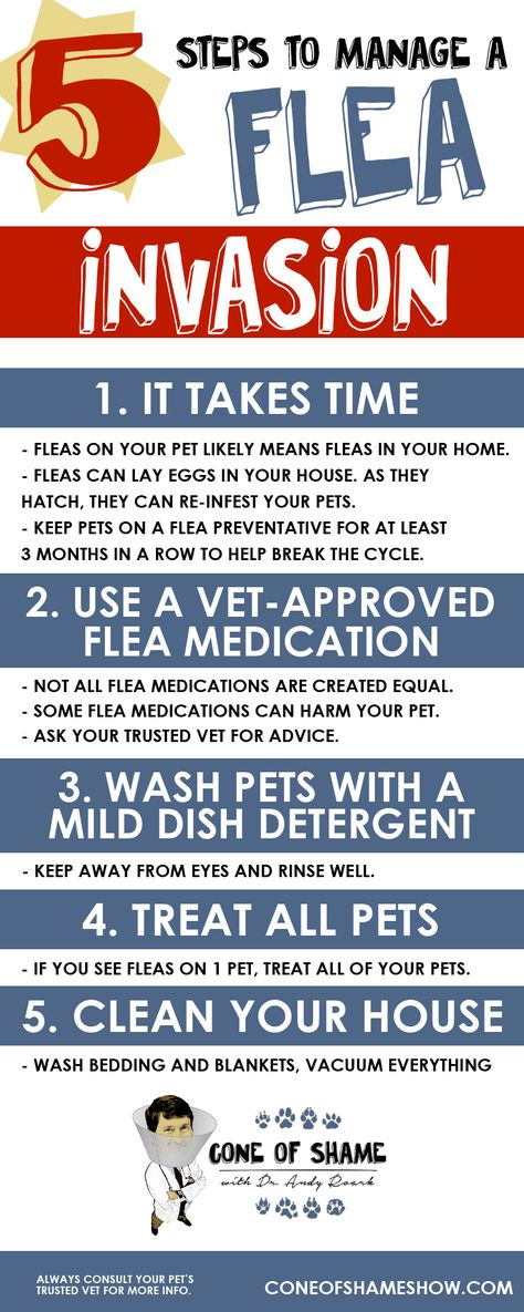 Get Rid Of Fleas On Pets And In Your Home With These 5 Tips From Dr