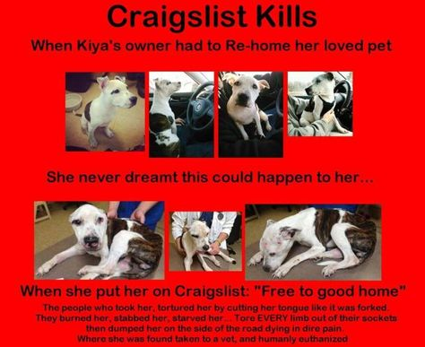 Stop Craigslist From Advertising Animals With Images Animals