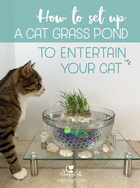 How to Make This Unique and Simple Cat Grass Pond Using Water Beads Cat Grass, Grass For Cats, Cat Insurance, Cat Hacks, Kitten Care, Cat Playground, Cat Drinking, Water Beads, Cat Room