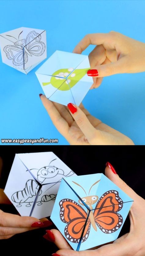 Let's learn about the life cycle of a butterfly with this engaging butterfly life cycle paper toy flextangle.