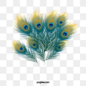 Wispy Peacock Feathers Peacock Peacock Feather Feather Png Transparent Clipart Image And Psd File For Free Download Feather Painting Peacock Art Peacock Pictures