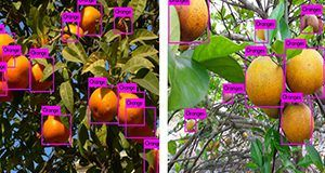 Real-time citrus detection using YOLO (a real-time AI object