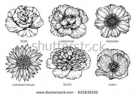Rose Carnation Anemone Chrysanthemum Peony And Poppy Flowers Drawing And Sketch With Line Art On White Flower Drawing Flower Tattoo Shoulder Poppies Tattoo
