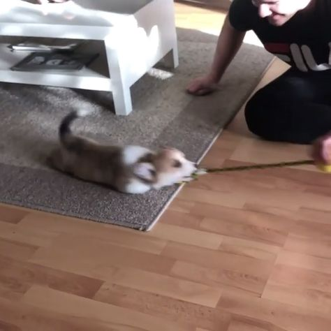 Play with dad
