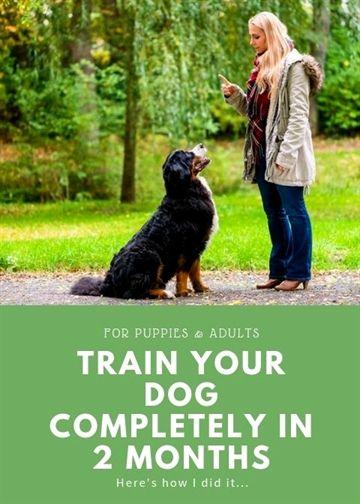 High Drive Dog Training Longmont Colorado Dog Training