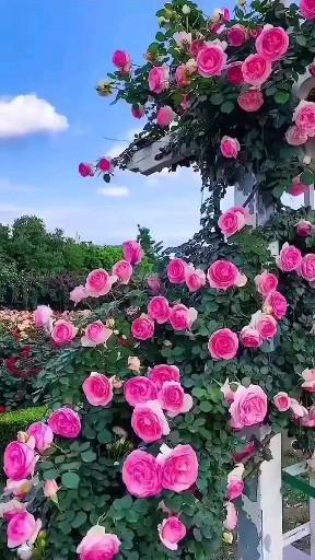 Beautiful Flowers🌼🌹 #flower #nature #flowers #beautiful #love #photography #flowerstagram #naturephotography #summer #floral #photooftheday #instagood #plants #flowersofinstagram #flowermagic #green #garden #blossom #india #bloom #petal #flowerslovers #petals #naturelovers #floweroftheday #picoftheday #instablooms #spring #florals #macro