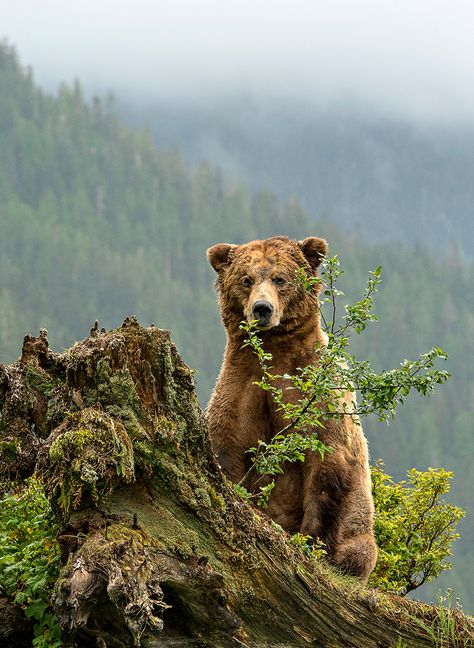 Photographer Michelle Valberg showcases her stunning pictures from within Canada's only grizzly sanctuary