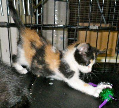 Taming Ferals Feral Kittens Fur Babies Kittens