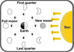 Phases Of The Moon Coloring Page For Students