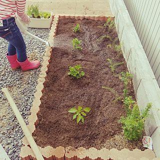 庭 山形県 手作り ミニガーデン 子供の畑 などのインテリア実例