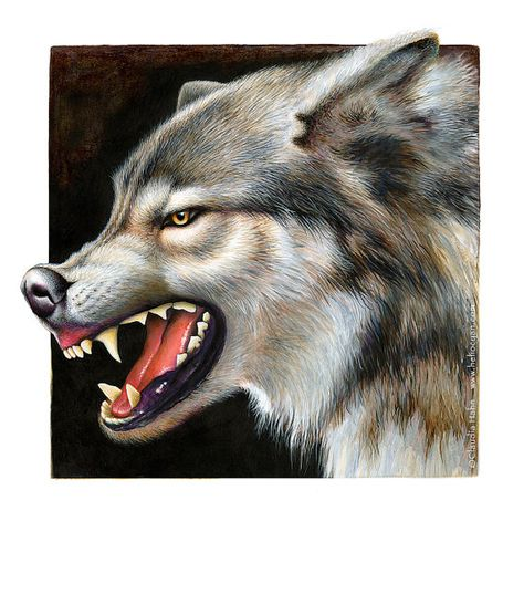 PRINT 'Timber Wolf' Growling wolf | Etsy