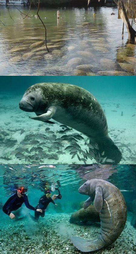 Los Mejores Destinos Y Hoteles De Lujo Hotels Hotel Travel Vacation Lujo Villas Luxury Restaurant Luxury Beautiful Sea Creatures Ocean Animals Manatee