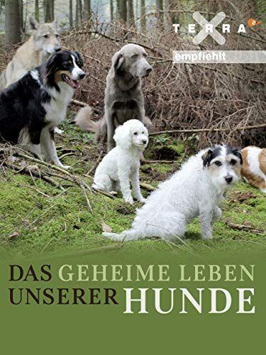 Das Geheime Leben Unserer Hunde Geheime Das Leben Hunde Mit Bildern Hunde Leben Geheim