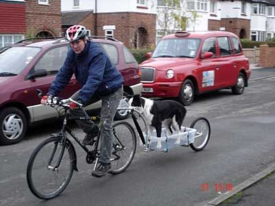 Dog Trailer Bicycle Stuff Pinterest Dog Collie And Animal