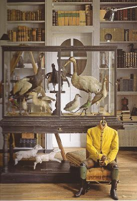 Taxidermy Collection In Glass Display Case Cabinet Of