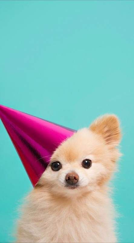 49 Ideas Dogs Wallpaper Iphone Awesome For 2019 Dogs Anjing
