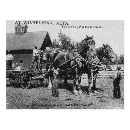 Weird Photo Giant Horses Postcard Photos Gifts Image Diy