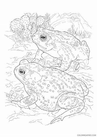 Image Result For Realistic Coloring Pages For Adults Frog Coloring Pages Animal Coloring Pages Desert Animals Coloring
