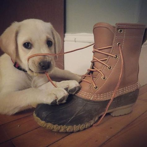 You have a little something on your face. (Photo: @kaeconroy) #LLBeanMoment #LLBeanPets #BeanBoots #dogsofinsta