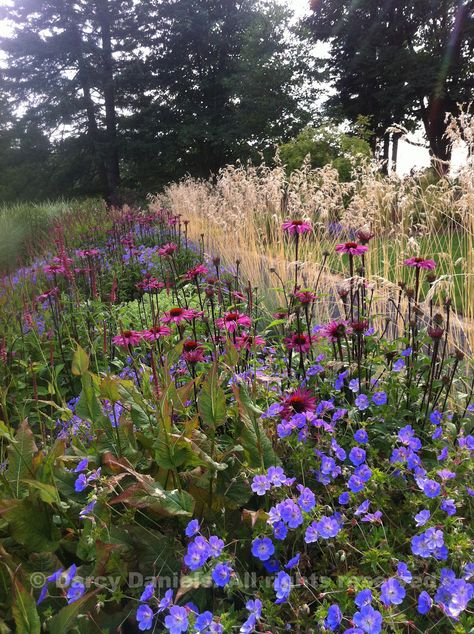 naturalizing the border with grasses