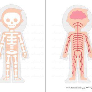 الجهاز العصبي الهيكل العظمي جسم الانسان مشروع أجهزة الجسم Jpg Fractions Pictures Science