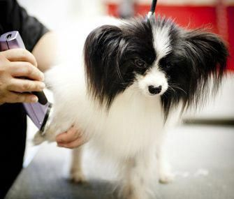 Low Cost Dog Grooming Near Me Candogseatcheese Dog Grooming Dog Shedding Dog Dental Care
