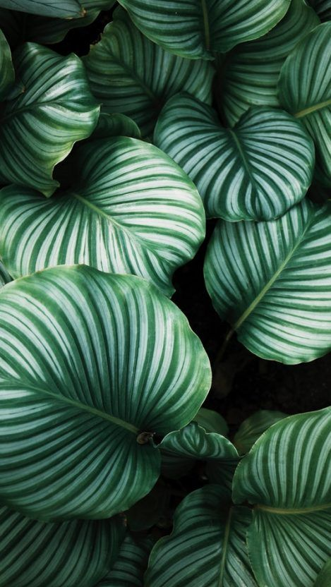 Nature Green Plants Iphone Wallpaper In 2019 Plant