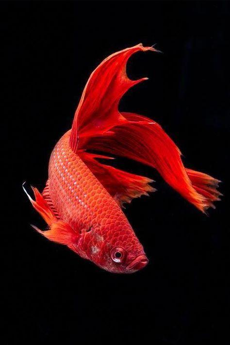 ❤️ #KoiFishColors