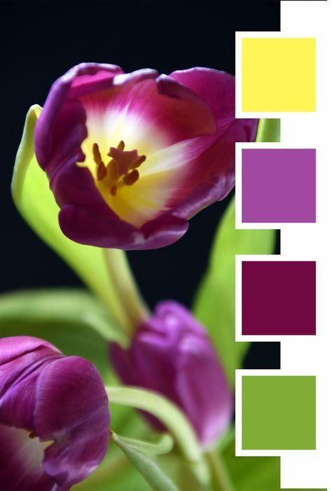 Hier Kostenlose Farbkombinationen Fur Verschiedene Themenbereiche