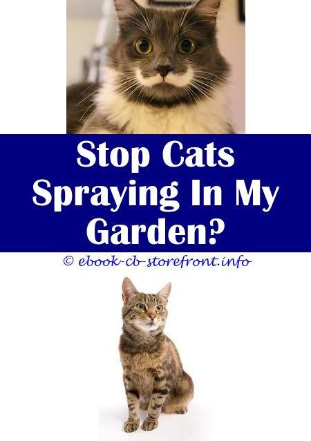 e670c175fc42cc02c59273ae8761ed92 - How To Get Rid Of Cat Spray Smell Under House