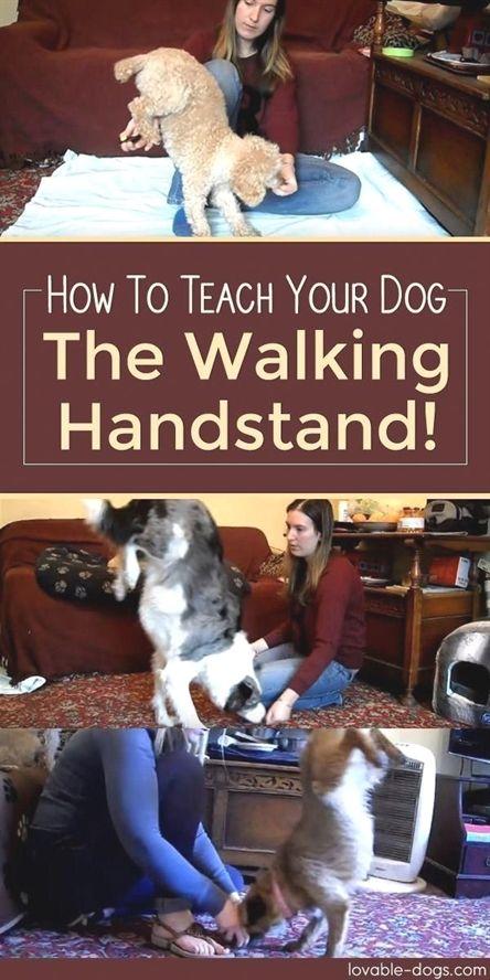 Dog Training Institute Training Course Dog Training Rope Dog