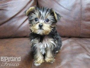 Pin By Linda Campbell On Dogs In 2020 Puppies For Sale Puppies Dogs